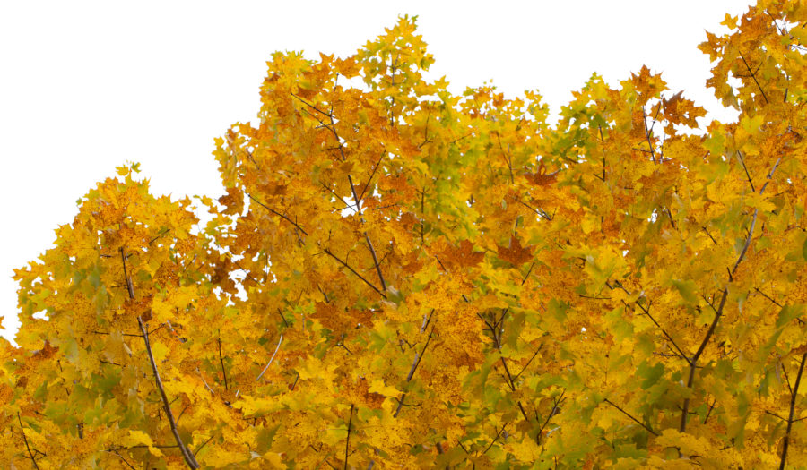 Foto van bladeren in herfst