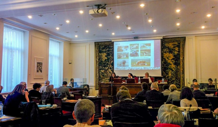 Een wetenschapper informeert het senaat in België over dierenrechten